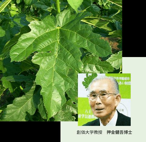 創価大学教授 押金健吾博士